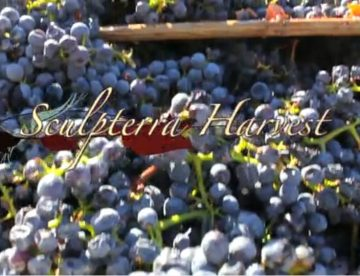 Sculpterra Harvest 2012